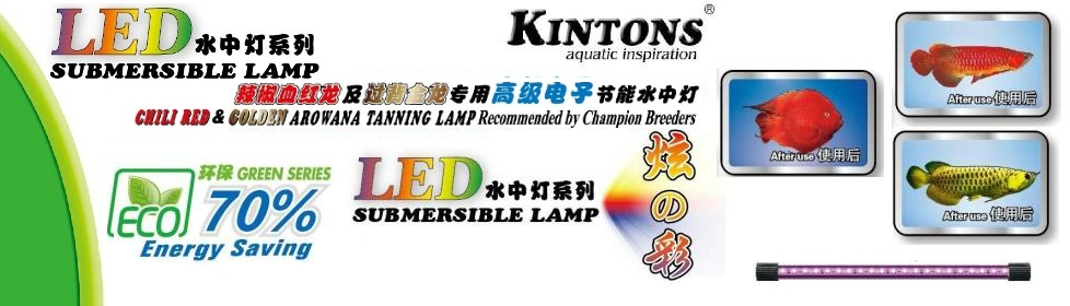 LED Submersible Lamp (Chili Red Golden Arowana Tanning Lamp)